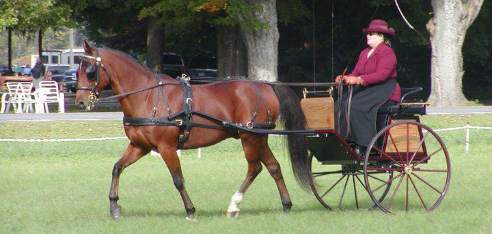 The Standardbred Connection